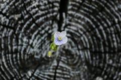 Cut log circles Royalty Free Stock Photo