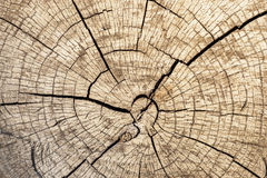 Cut of log with concentric rounds Royalty Free Stock Photos