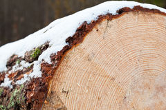 Cut log covered with snow Stock Images