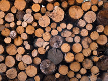 Cut log Stock Photography