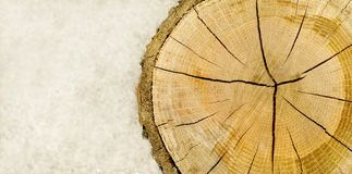 Cut Log panoramic Royalty Free Stock Images