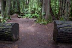 Cut Log Path Stock Photos
