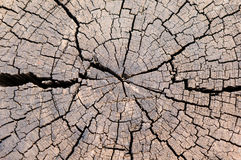Cut log wood grain. Cut log showing tree rings and cracks Stock Photography