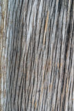 Cut log wood grain Stock Photography