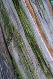 Cut log wood grain Royalty Free Stock Photography