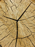 Cut log, woodgrain background texture Stock Photography