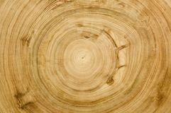 Cut Log Woodgrain Texture Stock Photography
