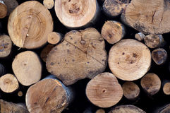 Cut logs. With different diameter Stock Image