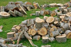 Cut logs Stock Images