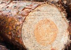 Cut logs Stock Images