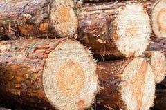 Cut logs Royalty Free Stock Photo