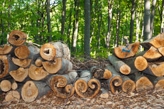 Cut logs Stock Photo
