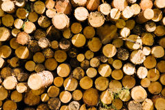 The cut logs Stock Image