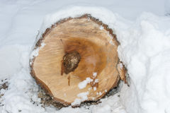 Cut logs. Slice of birch logs covered with white snow royalty free stock photos