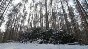 Cut logs and branches from a tree trunk lying in the forest partially covered in snow.  stock video