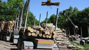 Cut logs equipment stock video