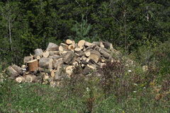 Cut logs for Firewood Stock Image