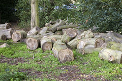 Cut logs in forest Stock Images