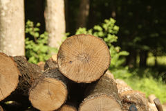 Cut logs with forest background Stock Images