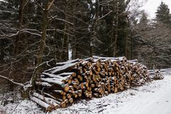 Cut logs in the forest snow covered royalty free stock photography
