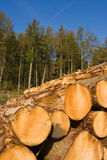 Cut logs in front of forrest. Stacked logs in front of pine forrest Stock Photography