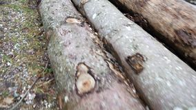 Cut logs lie along the road. Pine logs stock video footage