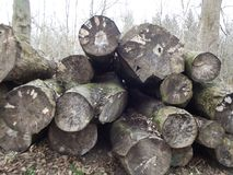 Cut Logs Royalty Free Stock Photography
