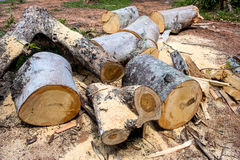 Cut Logs In Logging Area Stock Photos