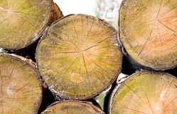 Cut logs on pile Stock Photos