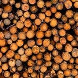Cut Logs stock photos