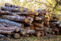 Cut logs Royalty Free Stock Photo