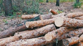 Cut Logs are Stacked in a Forest stock video