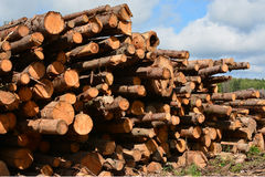 Cut logs stacked Royalty Free Stock Photo
