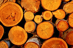 The cut logs. In sun beams at sunset Stock Photography