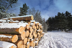 Cut logs in a winter under snow Royalty Free Stock Image