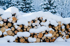 Cut logs in a winter wood under snowdrifts Stock Image
