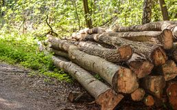 Cut and marked tree logs Stock Image