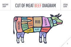 Cut of meat set. Poster Butcher diagram and scheme - Cow. Colorful vintage typographic hand-drawn on white background for butcher shop. Vector illustration Stock Images