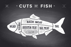 Cut of meat set. Poster Butcher diagram and scheme - Fish. Vintage typographic hand-drawn on a black chalkboard background. Vector illustration Stock Photo