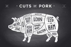 Cut of meat set. Poster Butcher diagram, scheme and guide - Pork. Vintage typographic hand-drawn. Vector illustration. Stock Images