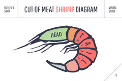 Cut of meat set. Poster Butcher diagram and scheme - Shrimp. Colorful vintage typographic hand-drawn visual guide for butcher shop. Vector illustration Royalty Free Stock Photography