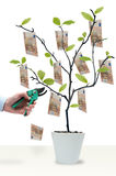 Cut the money tree Royalty Free Stock Images