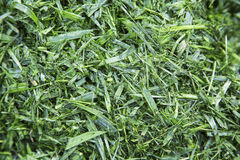 Cut mulched grass clipping pile Stock Photography