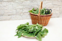Cut nettle leaves on a plate and basket royalty free stock photo