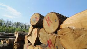 Cut oak logs. On the territory of the sawmill, top view. Steadycam shoot stock video footage