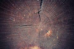 Cut oak tree Stock Photo