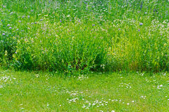 Cut off grass Royalty Free Stock Image