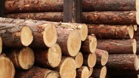 Cut off tree bark. Nature texture stock footage