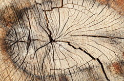 Cut off the tree wood cracks and rings texture Stock Images