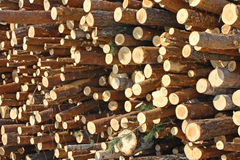 The cut off wood Stock Images
